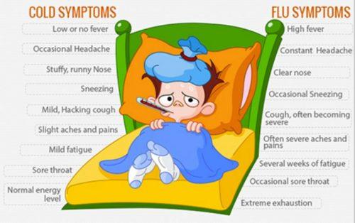 cold vs flu